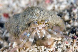 Little hermitt crab. by Michael Shope