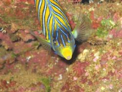 Smiling Fish taken at Anae Caves, Guam. by Ben Nichols