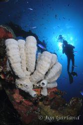 Tomo over the wreck of the HOKI MARU. Thanks Tomo. by Jim Garland