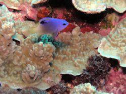 Macro Fish by Nicolas Pohl