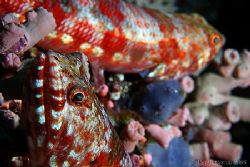Double Lizardfish ! 400D by Alex Tattersall