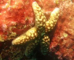 Starfish by David Johnson