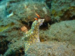 Painted hypselodoris sitting up and posing. sony T3 point... by Rory Ferguson