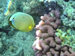 Great Barrier Reef by Heather Shaw
