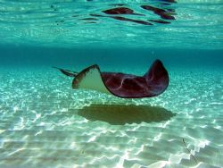 Stingray and reflections. by Carlos Valenzuela