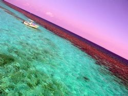 Great sky over the corral gardens reef in Grand Cayman by Andrew Kubica