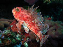 Dragonhead in Red  Photo taken in Croatia - Krk Sea & ... by Martin Wierda