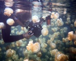 Jelly Fish Lake,  Palau...  Diver is taking macro shots w... by Claudia Goldsberry
