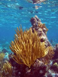 reef shot- Grand Cayman- Olympus SP-350 by Andrew Kubica