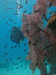 Ocean Xplorer. Taken With Canon S80 In Tioman, Malaysia. by Edvin Eng