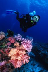 My buddy with a nice clump of soft corals by Richard Smith