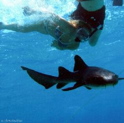 My girlfriens swimming with a shark at the corral gardens... by Andrew Kubica