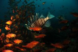 Fish Bowl by Clive Ferreira