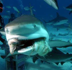Shark bite by Tara Artner