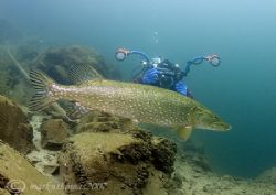 Pike and Mr H. Stoney Cove. D200, 16mm. by Mark Thomas