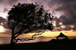 """""""Island Sunrise"""". This photo was taken on the East side o... by Mathew Cook"""