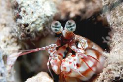 Eyes for you..........