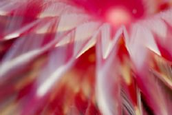 tube worm close-up. I love the colours. by Erika Antoniazzo