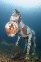 Seahorse, must be seeing things... Capernwray. D200, 16mm. by Derek Haslam