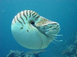 Nautilus by Noby Dehm