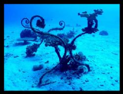 Table Coral vs Coral Table - Mondoro Philippines by Canon... by Vasa P, Sirinupongs