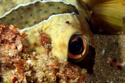 Hiding Boxfish: 100mm Canon 20D by Clive Ferreira