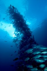 Up Periscope. Line of Jacks in the Solomons by Andy Lerner