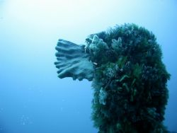 South Africa, Hout Bay. Aster Wreck dive. Corals & sponge... by Frank Richardson