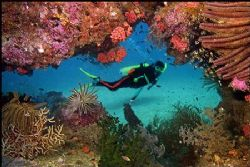 It was the first dive ever on this reef, which we had jus... by Vandit Kalia