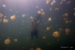 Free diver at the Jelly Fish Lake, Palau, Canon 20D, 10-2... by Dan Blum