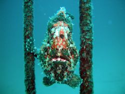 A giant frogfish performs on the parallel bars, taken at ... by Tony Otion