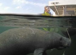 I don't see no stinking Manatees!!! Taken in Crystal Rive... by Scott Harrison