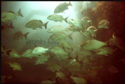 Boca da Barra`s scuba dive local at Porto de Galinhas` be... by Alexandro Auler