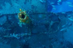 Interesting tube protruding from a shipwreck that shows c... by Dale Hymes