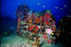 Wreck of the Major General Rogers, St. John, USVI. Beauti... by Mike Smith