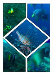 fish , fish fish,,, by Kaj Toivola