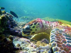 turtle by Toldo Mario