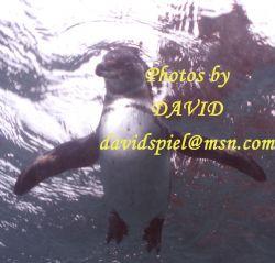 Friendly Penguin by David Spiel