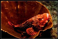 Resting Scorpio by Clive Ferreira