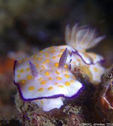 Nudi on the wreck of the King Cruiser Wreck/Thailand. Tak... by Patrick Neumann