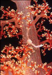 manado sea  soft coral by Virga Riccardo