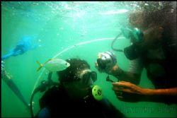 Scuba dive at Tamandaré´s Beach Coast. Pernambuco, Brazil. by Alexandro Auler