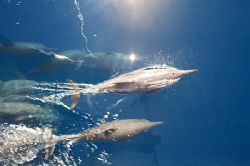 A pod of dolphins joined us for the boat ride to the isla... by Natasha Tate