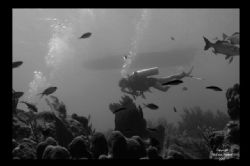 Diver at Black Rock Grand Cayman Available light only by Neil Van Niekerk
