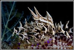 Spikes on spikes what a stinging combination!350D/105 by Yves Antoniazzo