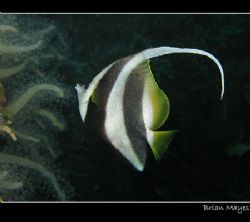 """""""Look at me, I've got a long fin""""...............Canon G7 by Brian Mayes"""