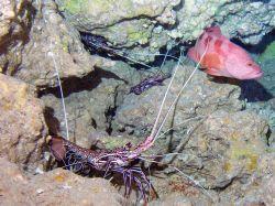 Seafood Buffet- Temple of Doom- Saipan MP by Martin Dalsaso