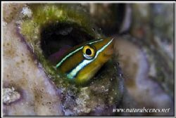 Smile your now in the under water photo contest 350D/105 by Yves Antoniazzo