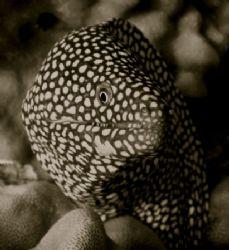 eel, waikiki by Elizabeth Chase