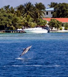 Not a bad place to live! Maldives, 2006. by Chris Wildblood